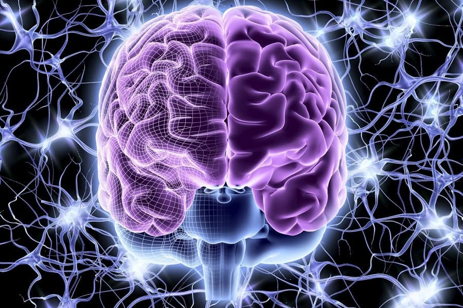 نحوه عملکرد مغز